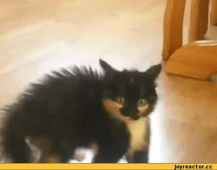 female cat bladder infection symptoms