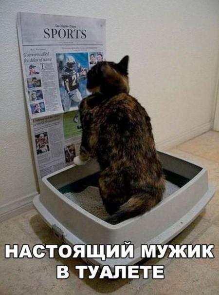 cat practice test grade 8