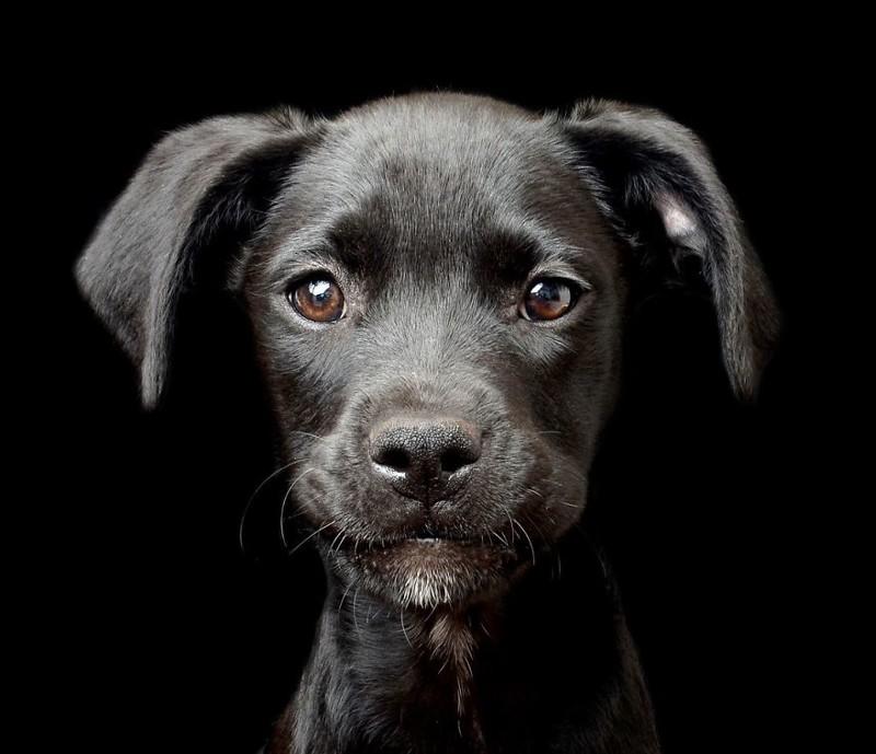 """2 место в категории """"Щенки"""" - Трейси Кирби, Ирландия Кеннел клаб, животные, конкурс, лондон, портрет, собаки, фото, фотография года"""