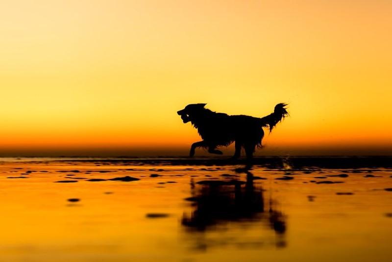 """2 место в категории """"Спасение собак и благотворительность"""" - Мартин Тош, Великобритания Кеннел клаб, животные, конкурс, лондон, портрет, собаки, фото, фотография года"""