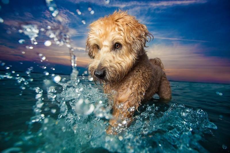 """1 место в категории """"Игры собак"""" - Кайли Грир, США Кеннел клаб, животные, конкурс, лондон, портрет, собаки, фото, фотография года"""