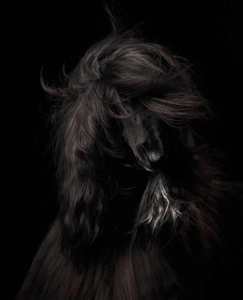 """1 место в категории """"Портрет собаки"""" - Анастасия Ветковская, Россия Кеннел клаб, животные, конкурс, лондон, портрет, собаки, фото, фотография года"""