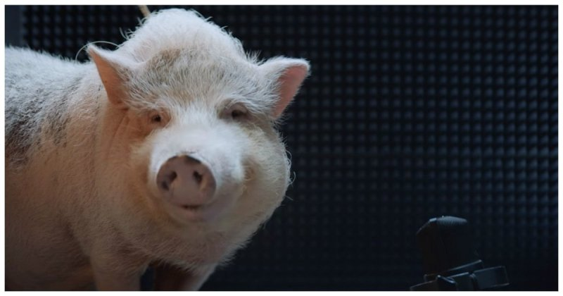 Мужской секс со свиньй