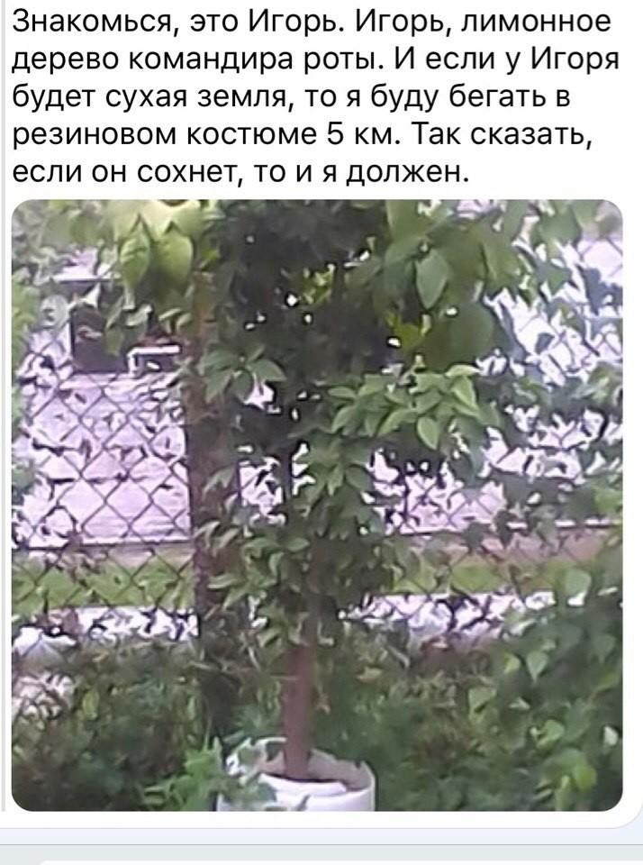 Вооруженные силы пытаются искоренять и предотвращать любые проявления неуставных отношений армия, казарма, прикол, россия, солдаты, юмор