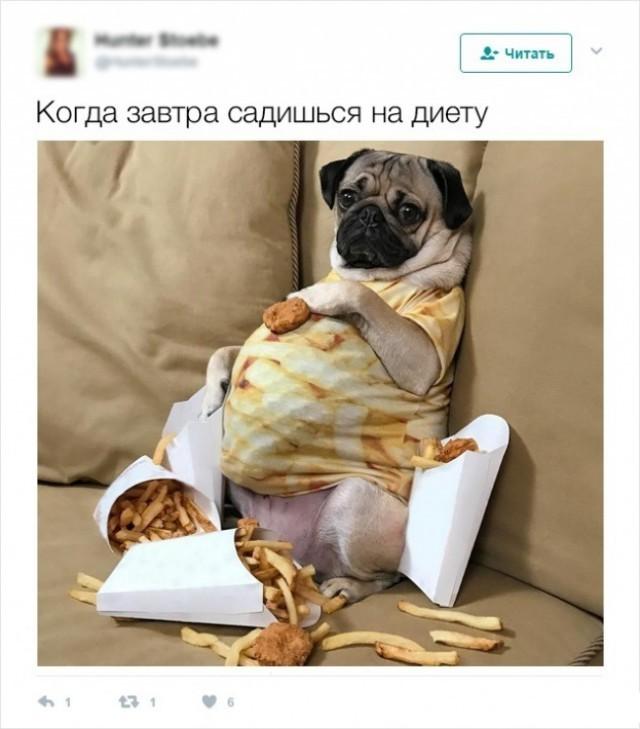 Юмор И Похудение Фото. Шутки про лишний вес (26 фото)