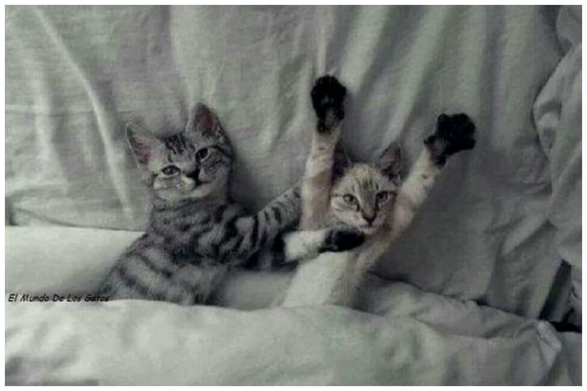 Кошачья жизнь - все как у людей