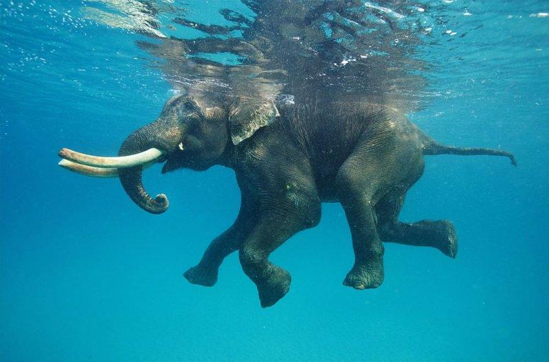 Животные, застигнутые за плаванием вода, водоем, животные, купание, плавание, природа, фото, фотография