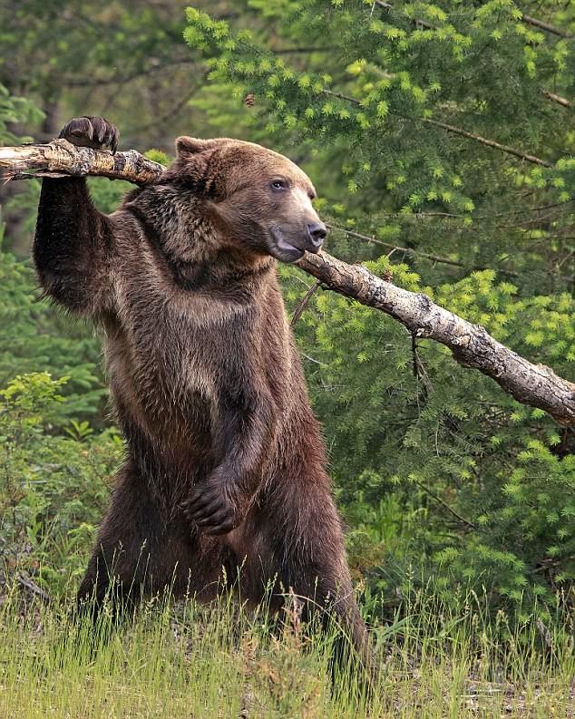 Медведь своими руками из дерева 170