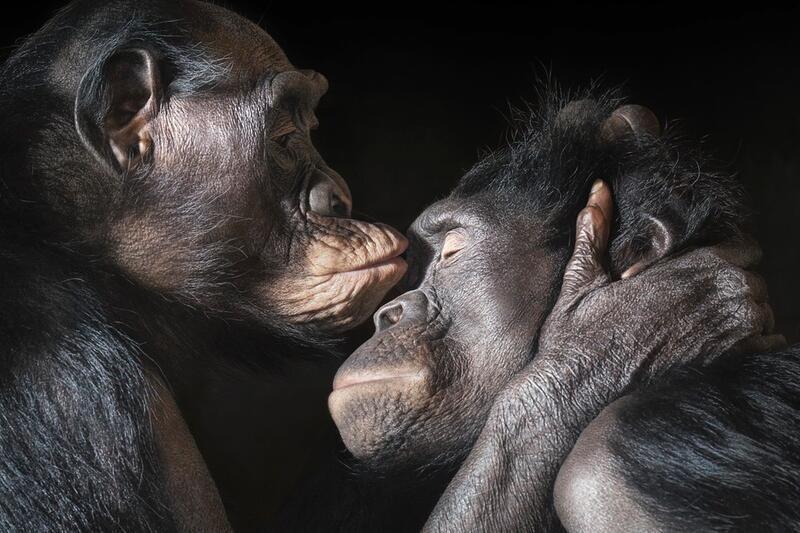 Реальные секс человека с обезьянами