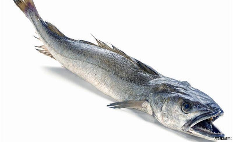 хек рыба картинки с головой