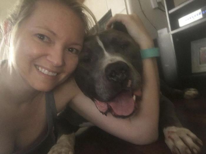 Из множества собак в приюте женщина по имени Дженнифер выбрала именно Блу животные, пес, питбуль, питомцы, собака, спасение, трогательно, фото