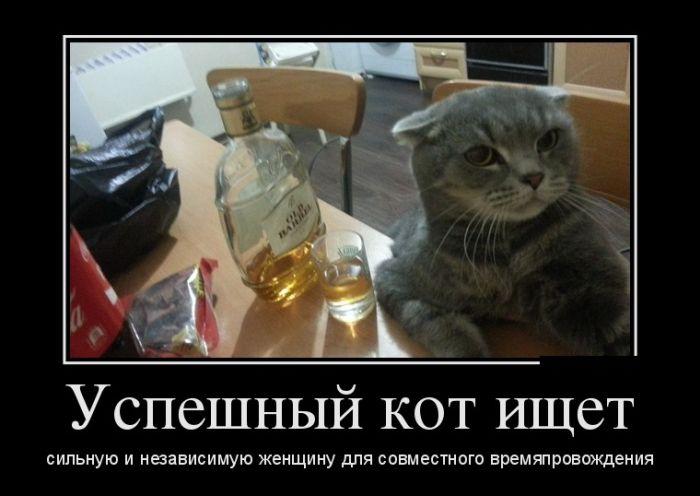 Успешный кот ищет сильную и независимую женщину демотиватор, демотиваторы, жизненно, картинки, подборка, прикол, смех, юмор