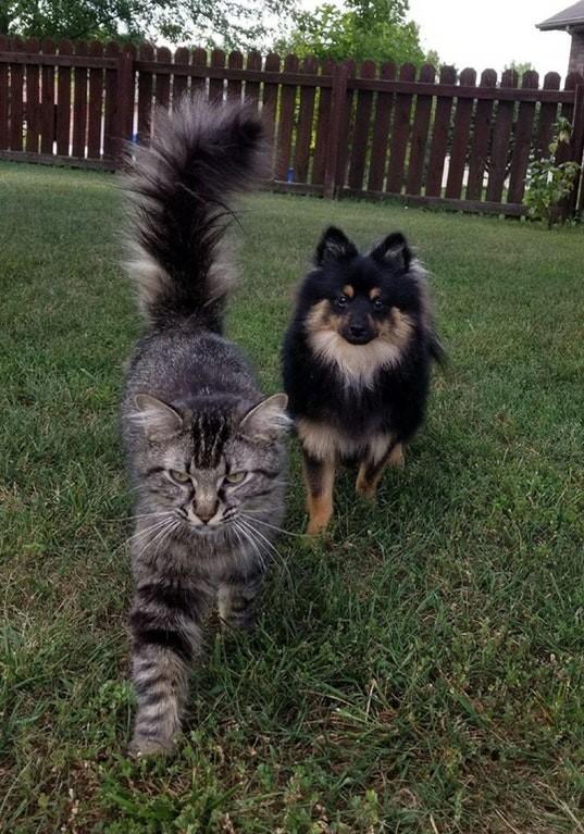 Не грози Южному Централу Любовь, дружба, животные, звери, кошки, собаки