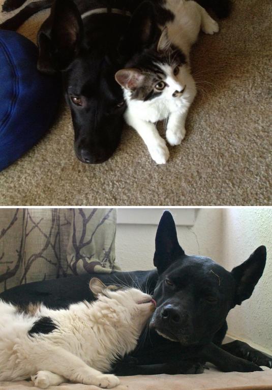 Лучшие друзья тогда и сейчас Любовь, дружба, животные, звери, кошки, собаки