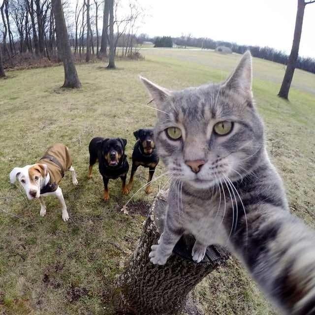 Гуляем тут с пацанами Любовь, дружба, животные, звери, кошки, собаки