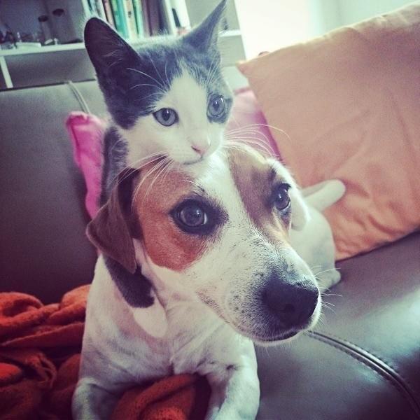 Покатаемся? Любовь, дружба, животные, звери, кошки, собаки