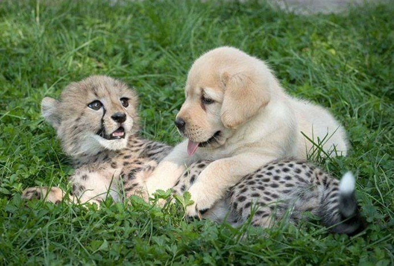 Когда животные - настоящие друзья Любовь, дружба, животные, звери, кошки, собаки