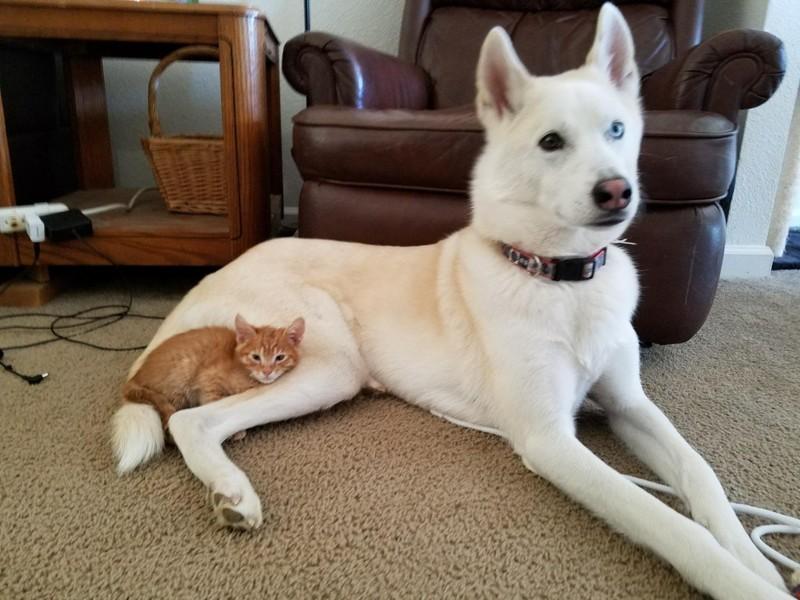 Новая подушечка Любовь, дружба, животные, звери, кошки, собаки