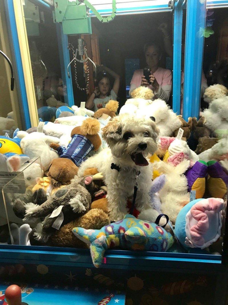 Кто хочет вытащить собачку? день, животные, кадр, люди, мир, снимок, фото, фотоподборка