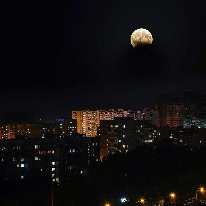 Лунное затмение день, животные, кадр, люди, мир, снимок, фото, фотоподборка