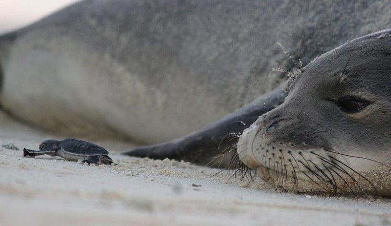 В мире животных день, животные, кадр, люди, мир, снимок, фото, фотоподборка