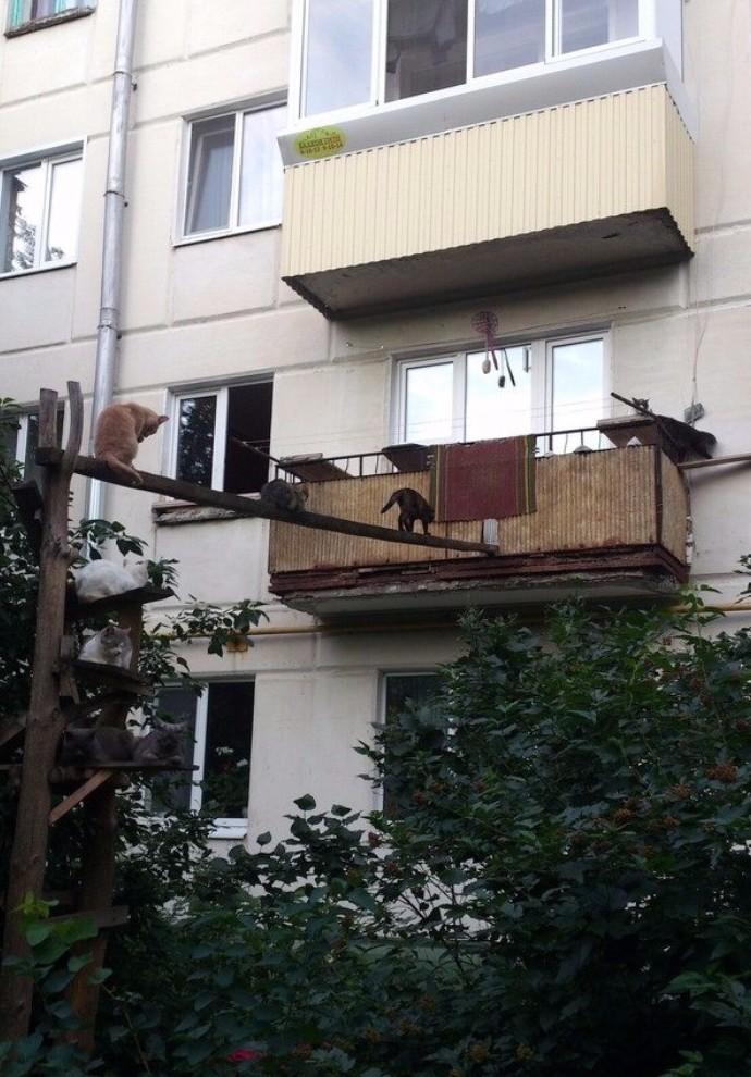 Гульба-гульбой, а обед - по расписанию! двор, забота, кормежка, коты, лестница, прикол
