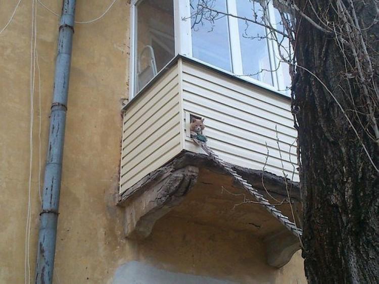 Труба зовет! двор, забота, кормежка, коты, лестница, прикол
