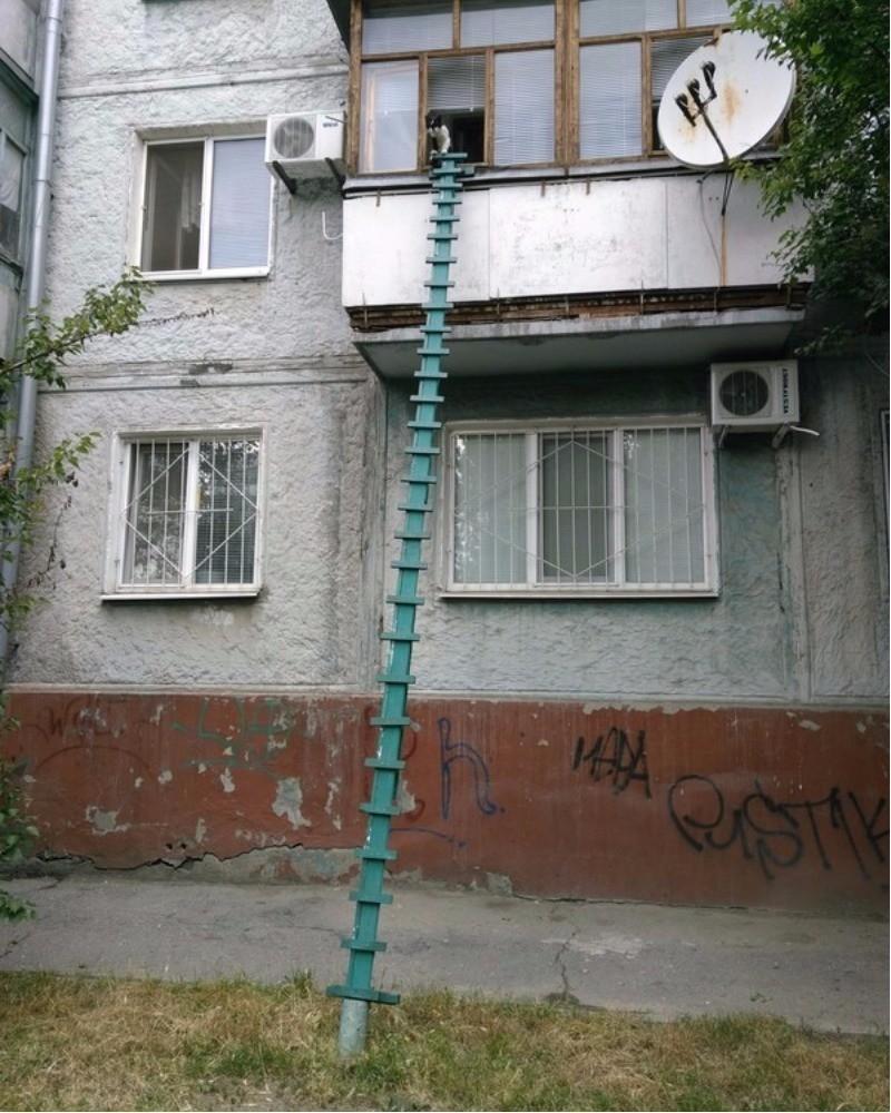 Пусть лестница кривовата. но я ленив, а этот путь короче! двор, забота, кормежка, коты, лестница, прикол