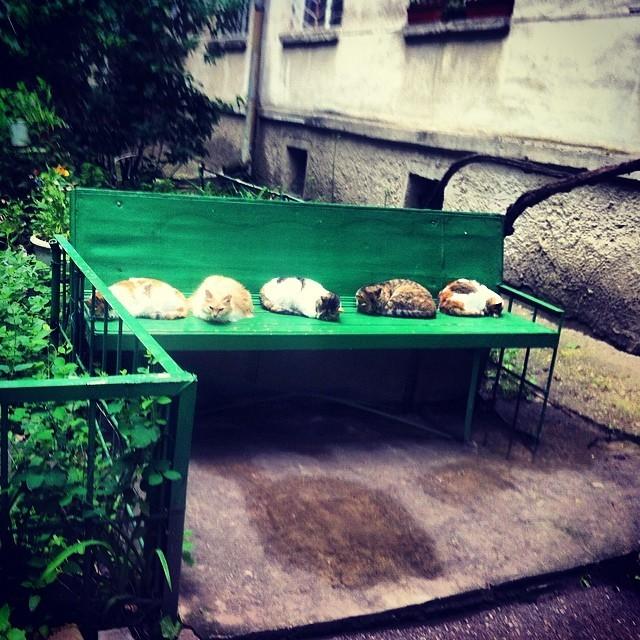 Подогрев скамейки активирован двор, забота, кормежка, коты, лестница, прикол