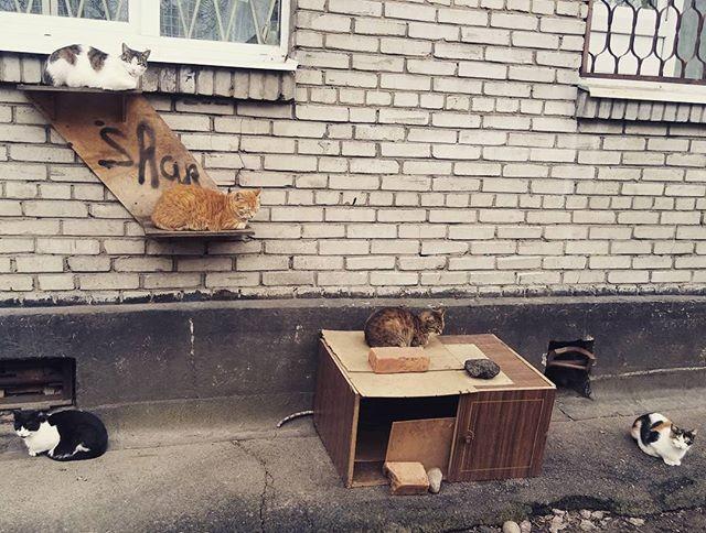 Заходи, садись, щас хозяйка кильки вынесет, заживем! двор, забота, кормежка, коты, лестница, прикол