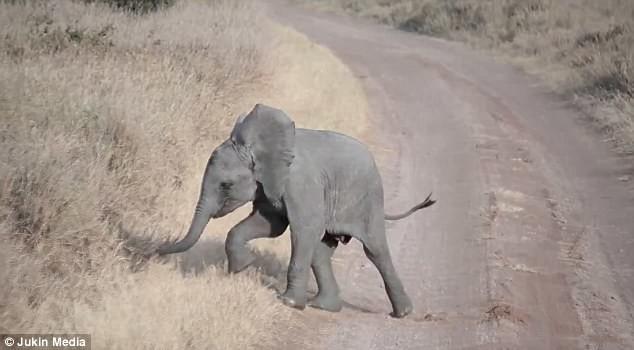 Уникальные кадры: неожиданный ответ слонихи на истерику слоненка африка, видео, животные, занимательно, заповедник, поучительно, слоны, фото