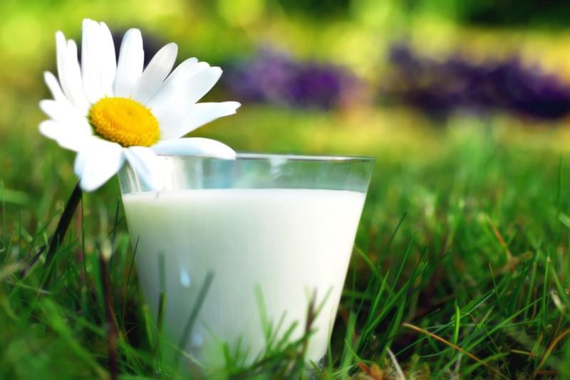 Молоко еда, качество, пища, полезное, продукты, свежесть, совет