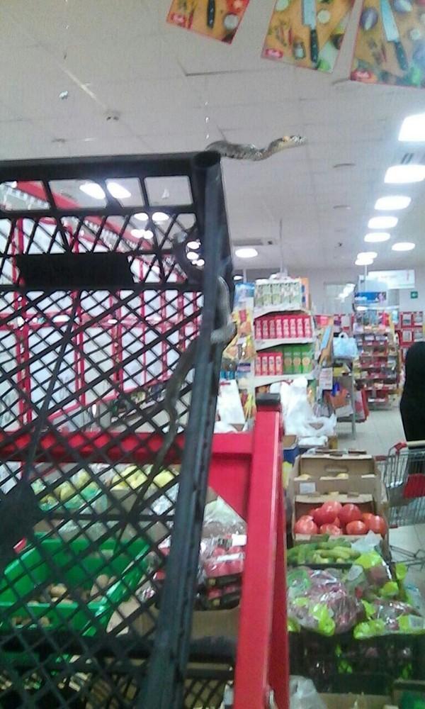 Руководство магазинов делает все, чтобы их покупатели не скучали forbes, галицкий, магазин, магнит, прикол, продавец, россия, юмор