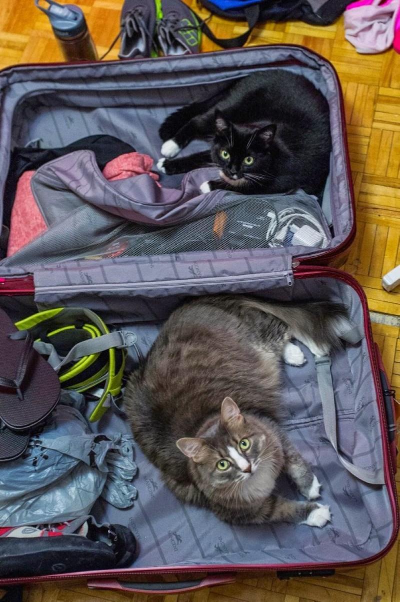 Больше половины россиян не поедут в отпуск из-за кошек животные, опрос, отпуск, россия, статистика