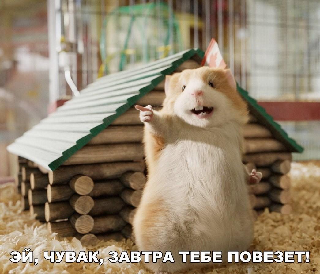 вашему очень смешные картинки с позитивом загрузить фото