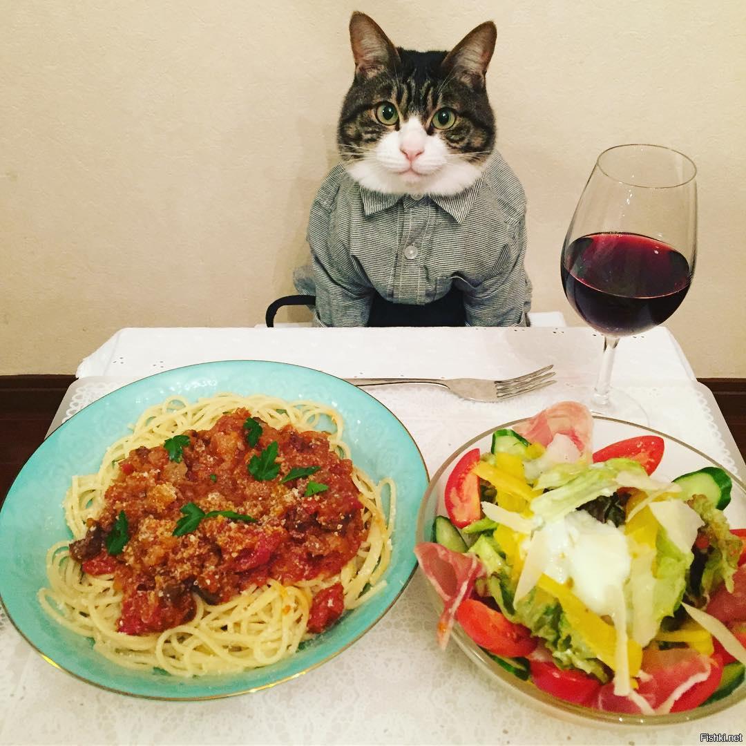 Фото приколы и картинки еда, днем рождения
