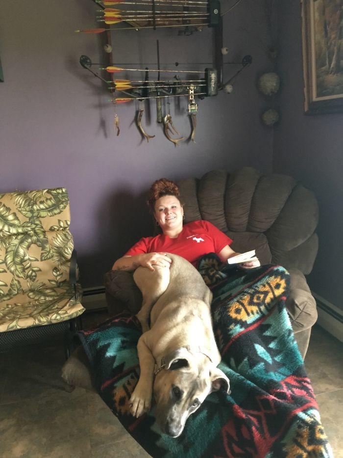 Эти реально огромные собаки думают, что они еще щенки! животные, люди, милота, питомцы, рост, собака