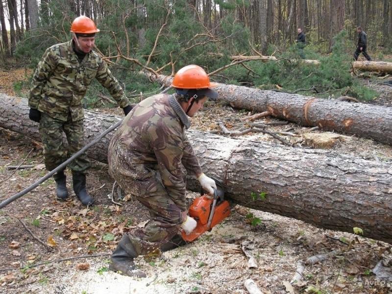 Каждый житель России имеет право на лес заготовки, лес, льготная древесина, строительство