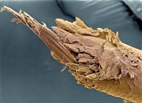 Щепка интересно, крупным планом, микромир, микроскоп, под микроскопом, поразительно, странности природы, удивительное рядом