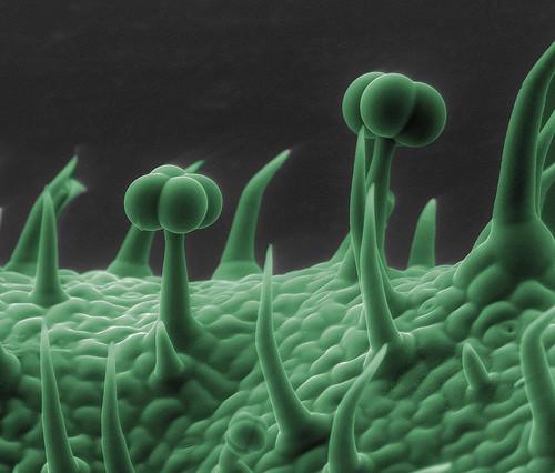 Нога геекона интересно, крупным планом, микромир, микроскоп, под микроскопом, поразительно, странности природы, удивительное рядом