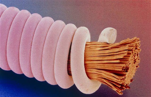 Гитарная струна интересно, крупным планом, микромир, микроскоп, под микроскопом, поразительно, странности природы, удивительное рядом