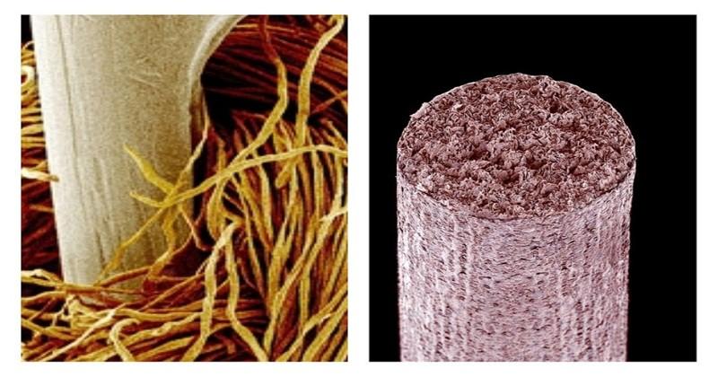 Вы не узнаете этих привычных вещей, если взглянете на них в микроскоп! интересно, крупным планом, микромир, микроскоп, под микроскопом, поразительно, странности природы, удивительное рядом
