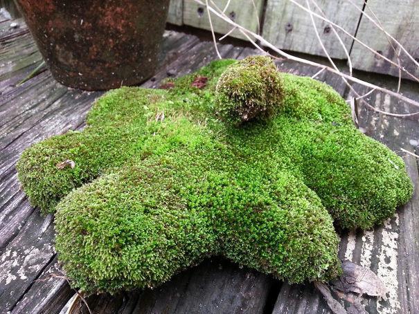 """""""Моя собака умерла 2 года назад. Долго не мог найти ее любимую игрушку, и случайно обнаружил в саду. Не смог сдержать слёз"""" возвращение, находки, неожиданно, потеря, потерянные вещи, потеряшки, сюрприз, фото"""