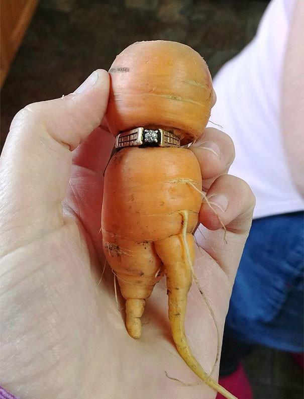 Морковь, как ты это делаешь? Вывод: что-то потеряли - смотрите в моркови возвращение, находки, неожиданно, потеря, потерянные вещи, потеряшки, сюрприз, фото