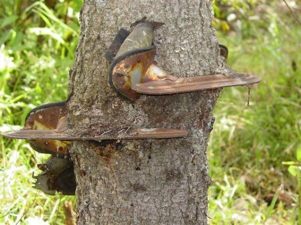 """""""Мой дедушка оставил эти коньки на маленьком дереве еще в молодости. Мы нашли их в дереве спустя много лет"""" возвращение, находки, неожиданно, потеря, потерянные вещи, потеряшки, сюрприз, фото"""