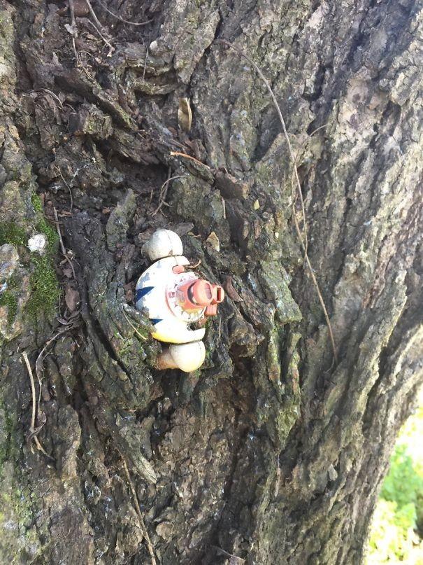 """""""Когда я был маленьким, оставил свою игрушку в саду. Нашел ее только сейчас, в дереве!"""" возвращение, находки, неожиданно, потеря, потерянные вещи, потеряшки, сюрприз, фото"""