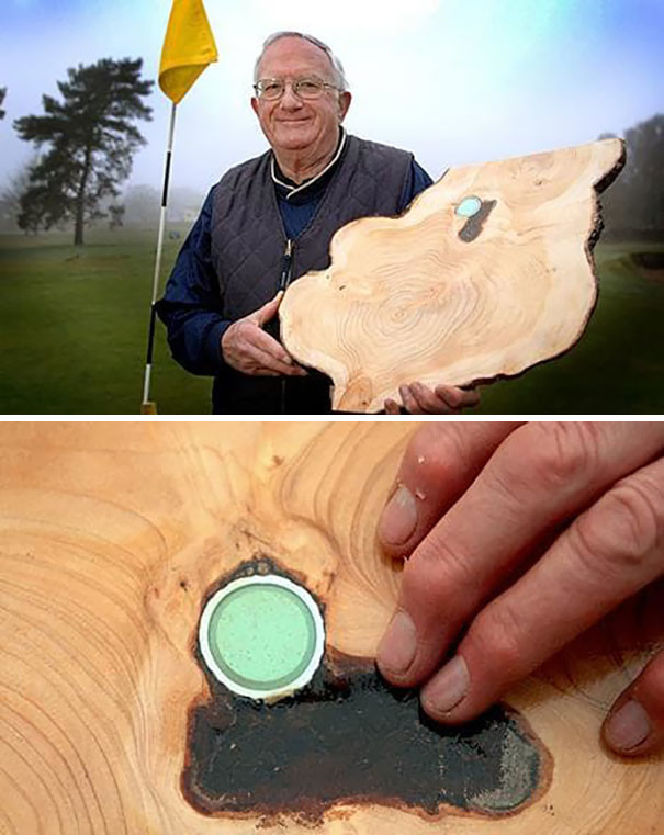 Он нашел свой мяч для гольфа в дереве спустя годы возвращение, находки, неожиданно, потеря, потерянные вещи, потеряшки, сюрприз, фото