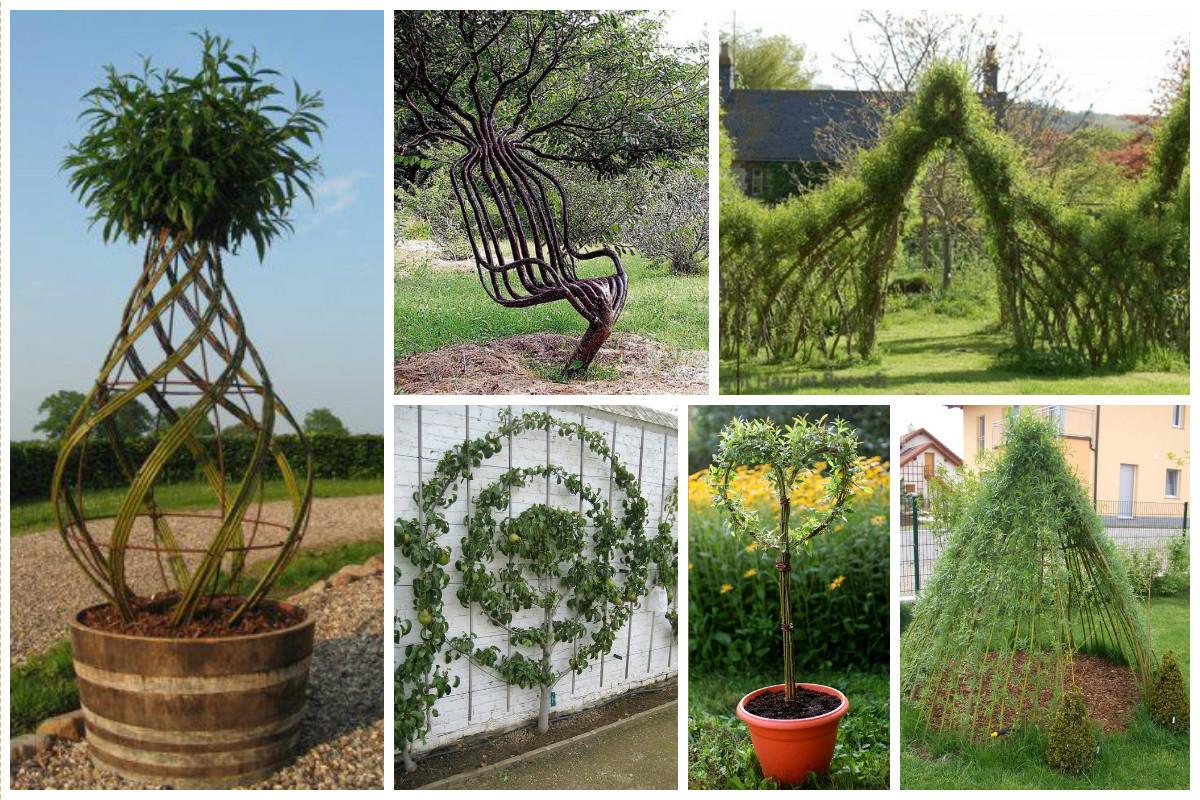 Больше всего для этих целей подходит бамбук, ива, верба и вьющиеся кустарники - дикий виноград, ежевика и т.п. деревья, заплести, интересное, красота, кустарник, сад, уход