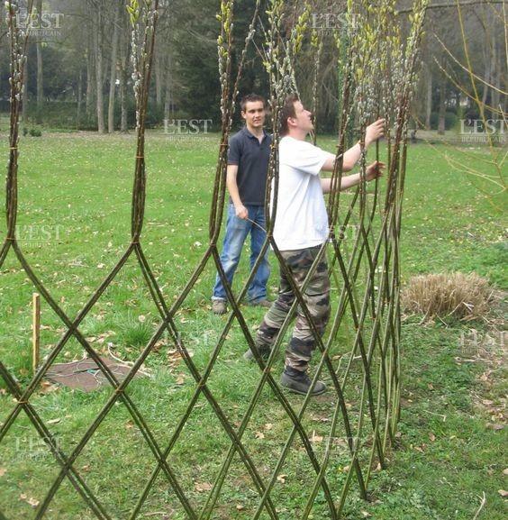 Заплетенные плетенки для очень терпеливых садоводов деревья, заплести, интересное, красота, кустарник, сад, уход