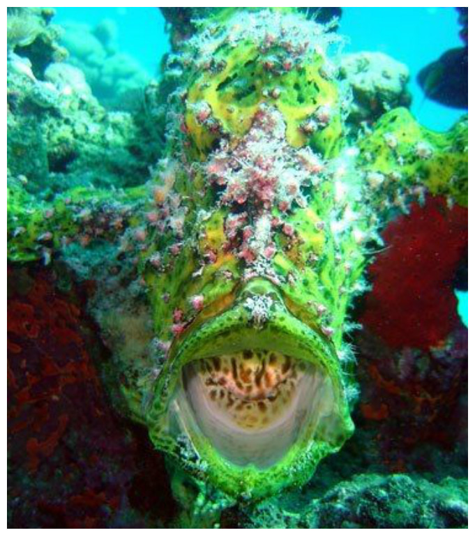 Рыба-ляшушка красиво, монстры, океан, опасные, рыбы, фото